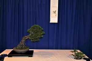 Best Display Black Pine owned by Louise Leister Best Companion Plant owned by Mike Sullivan